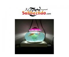 Decorated Fish Bowl With Led Light